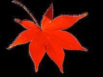 紅葉イメージ1